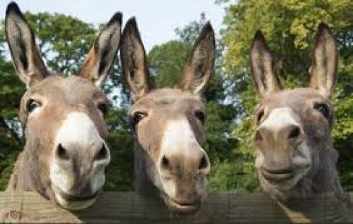 sidmouth donkey sanctuary.jpg