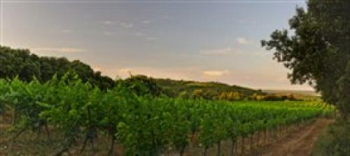 wine 2.jpg_1553086002