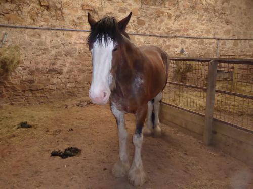 Heavy Horse.JPG_1537227235