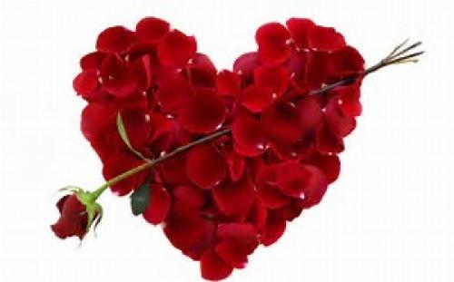 untitledred roses.png