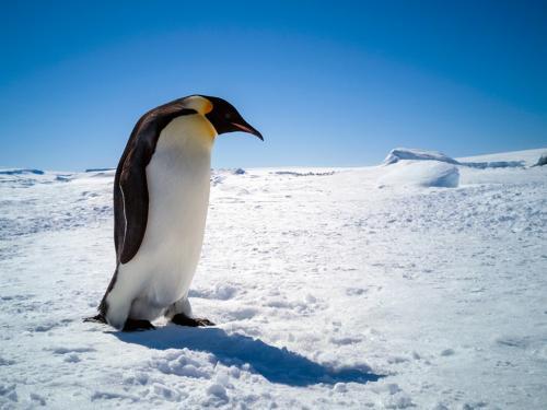 Lone penguin.jpg_1560338882