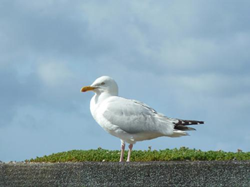 Wildlife in the Scottish Borders8.jpg_1531991835