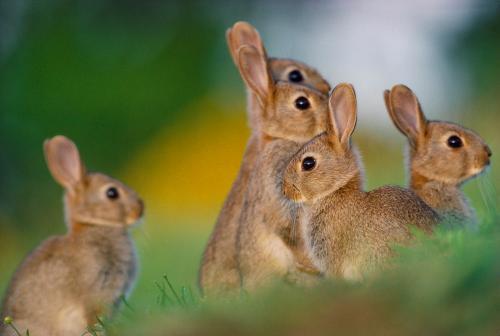 rabbit 1 L.Campbell L.Campbell.jpg_1573311550