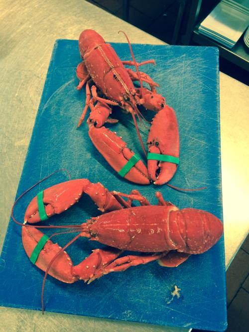 Lobster from Brixham