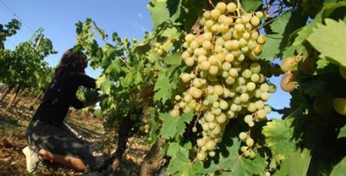 Wine 3.jpg_1553086002
