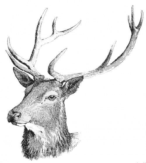 Stag Head Transparent.png_1575308647