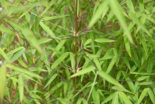 Jiuzhaigou.jpg_1568642239
