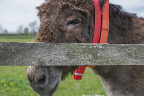 donkey-1.png