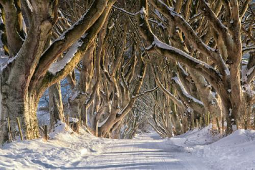 16513_Game of Thrones_ - The Dark Hedges_The Kings