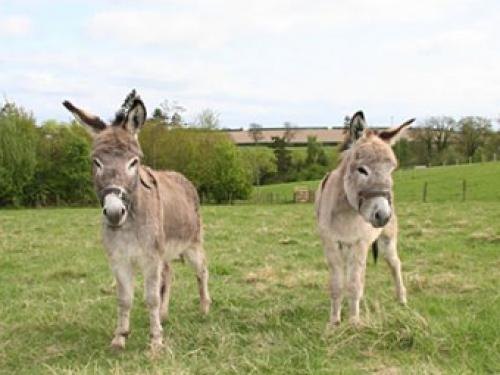Scottish Borders Donkey Sanctuary St. Boswells Roxburghshire Sco