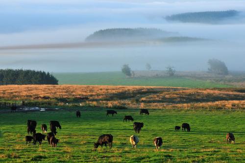 Lammermuir hills (7).jpg_1551981556