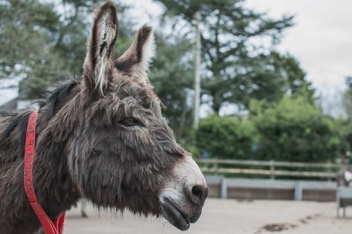 donkey sanctuary in sidmouth.jpg