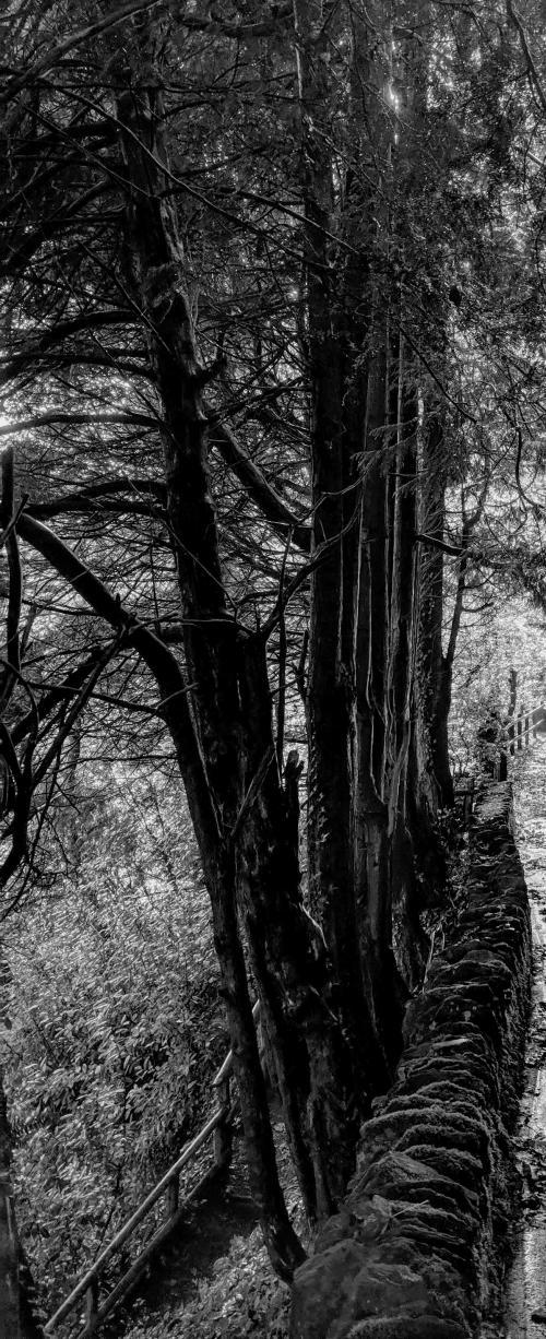 trees.jpg_1582479891