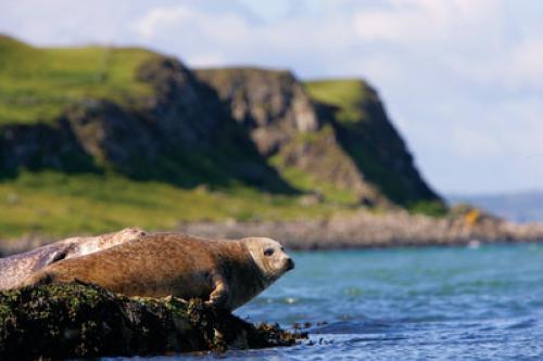 20165_Rathlin Island - Seals.jpg_1588712512
