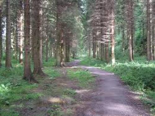 hamsterley trees.jpg_1545428804
