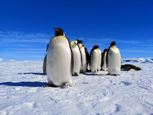 Penguin group.jpg_1560338870